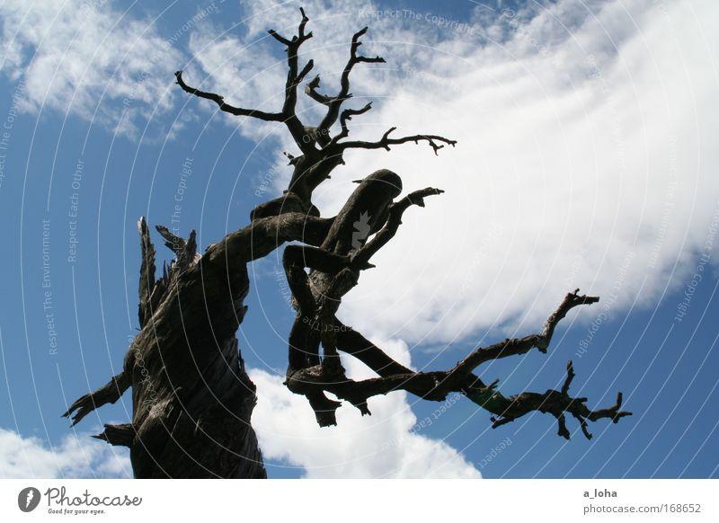 stairway to heaven Freiheit Sommer Berge u. Gebirge Natur Landschaft Urelemente Himmel Wolken Holz Linie alt außergewöhnlich hoch kaputt oben trocken blau grau