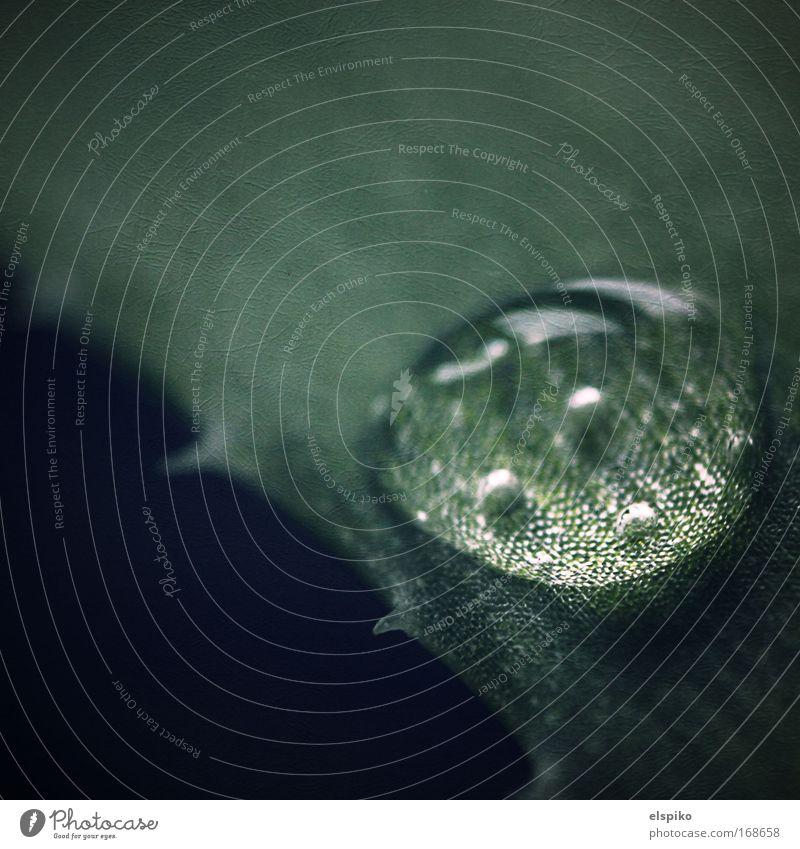 Blister Natur Wasser schön grün glänzend Wassertropfen Blase