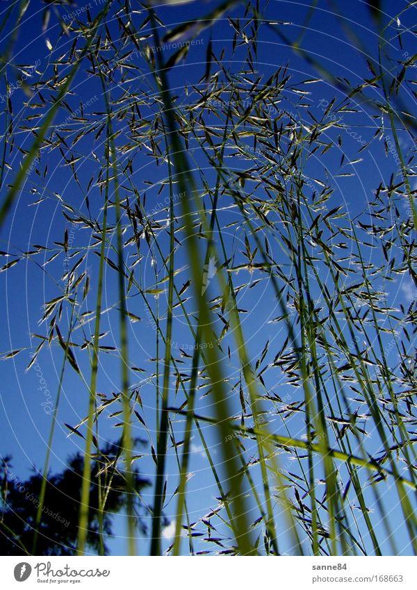 Hochwald Natur Himmel grün blau Pflanze Sommer Leben Wiese oben Gras hoch Perspektive nah lang natürlich unten