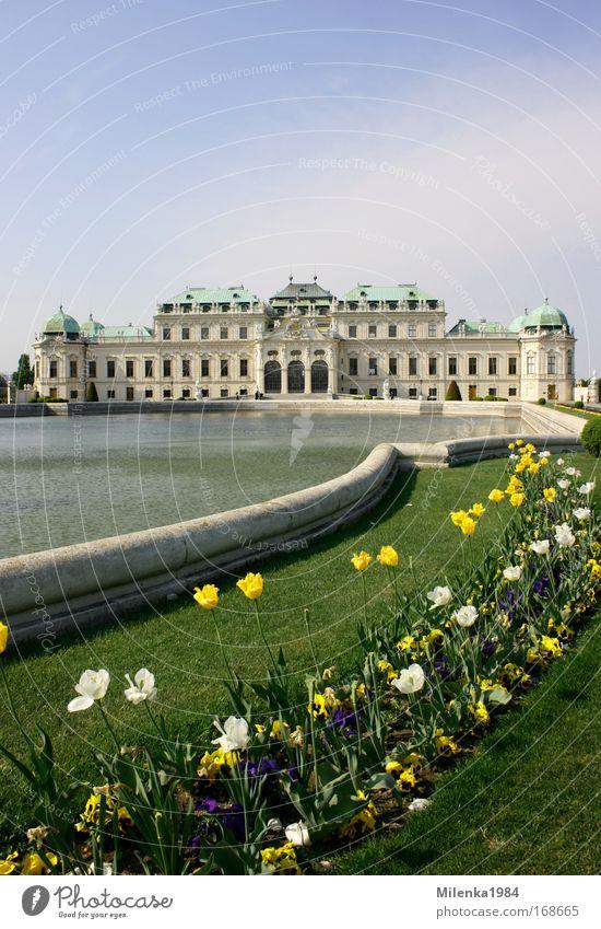 Wien, nur Wien Gebäude Kunst groß Burg oder Schloss Österreich Tulpe Sehenswürdigkeit Sightseeing Hauptstadt Belvedere