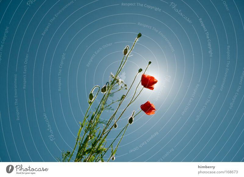 mohn patrol Natur schön Blume Pflanze Sommer Ferien & Urlaub & Reisen ruhig Blatt Erholung Wiese Stil Frühling Glück Park Zufriedenheit hell