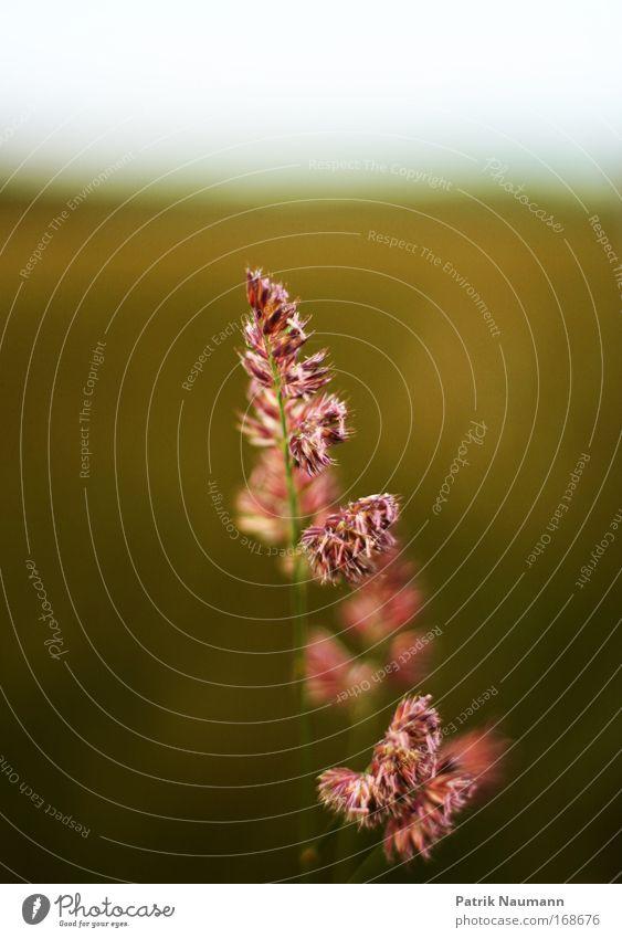 Alleinstellungsmerkmal die 2. Farbfoto Außenaufnahme Nahaufnahme Menschenleer Textfreiraum oben Tag Unschärfe Schwache Tiefenschärfe Zentralperspektive Umwelt