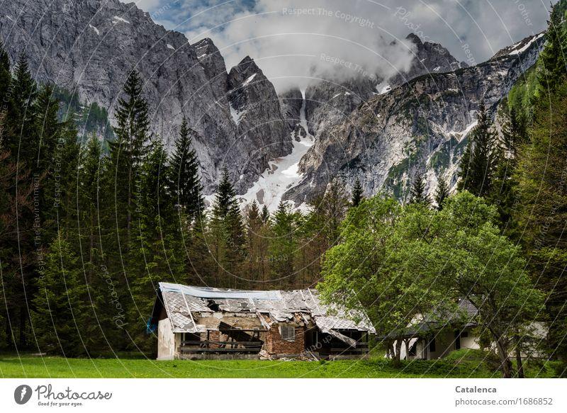 Verlassenes Zuhause Ferien & Urlaub & Reisen Berge u. Gebirge Berghütte wandern Landschaft Pflanze Wolken Sommer schlechtes Wetter Schnee Baum Gras Tanne