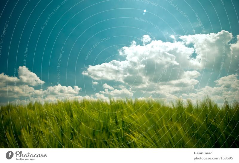 Windfenster I. Himmel Natur blau grün Ferien & Urlaub & Reisen Sommer Tier Wolken Umwelt Landschaft Freiheit Gras Luft träumen Horizont Wind