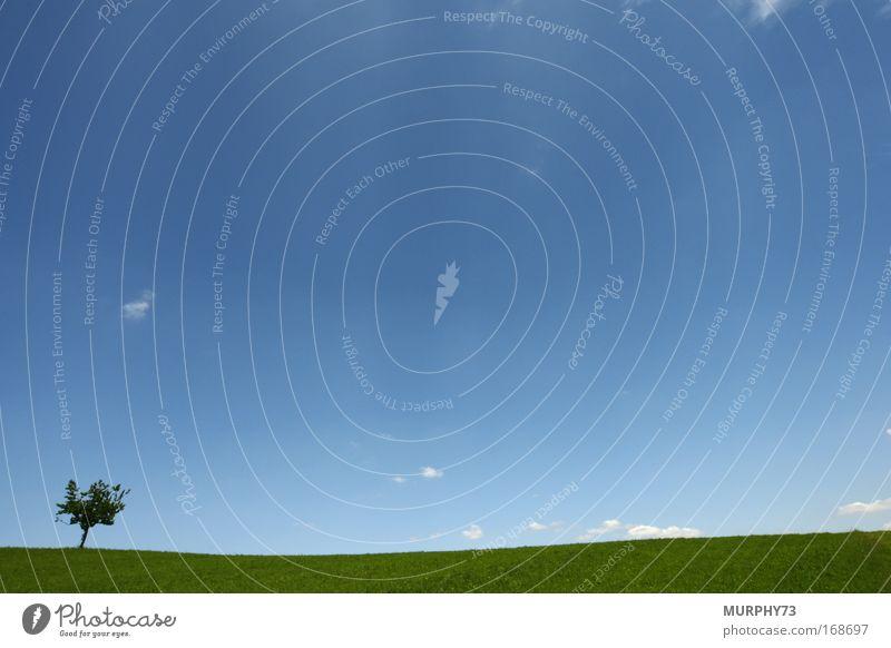 Einsamer Baum in blau/grüner Weite.... Natur Himmel Pflanze Wolken Einsamkeit Wiese Gras Frühling Freiheit Landschaft Luft Feld Umwelt Horizont