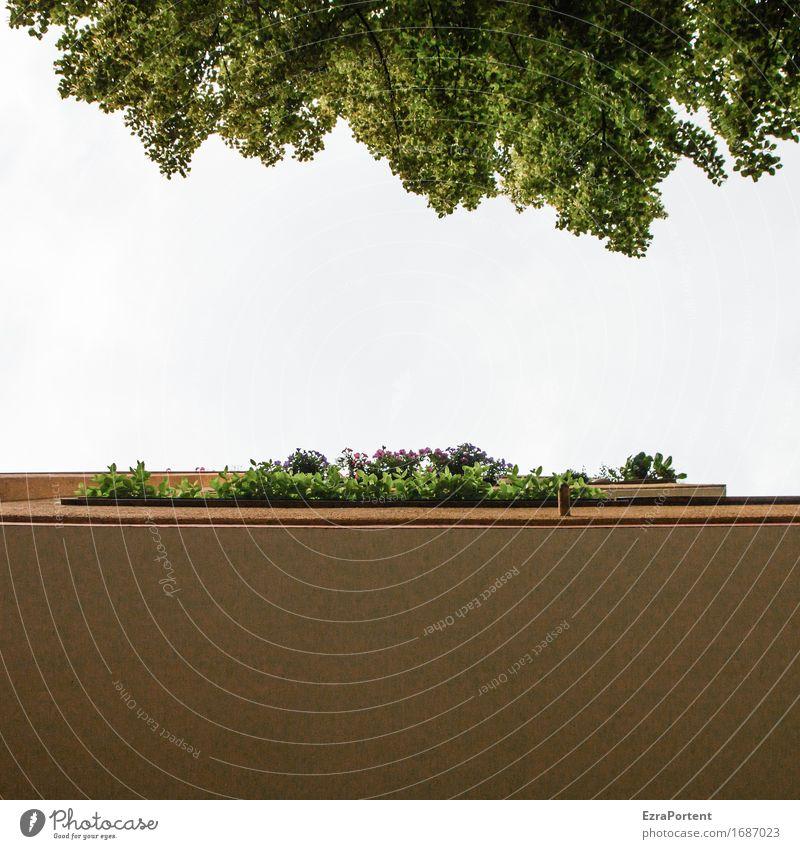 blauer Himmel war einmal Frühling Sommer Pflanze Baum Blatt Haus Bauwerk Gebäude Architektur Mauer Wand Fassade Balkon grün weiß Balkondekoration Balkonpflanze