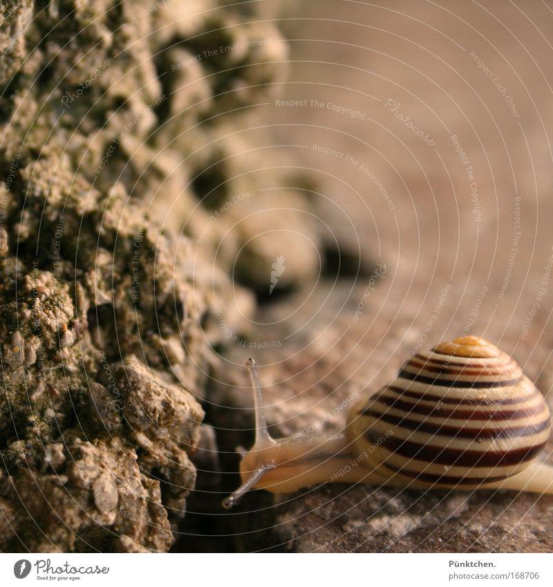 >@---- Gedeckte Farben Außenaufnahme Nahaufnahme Menschenleer Textfreiraum rechts Textfreiraum oben Abend Unschärfe Tierporträt Blick Felsen Schnecke 1