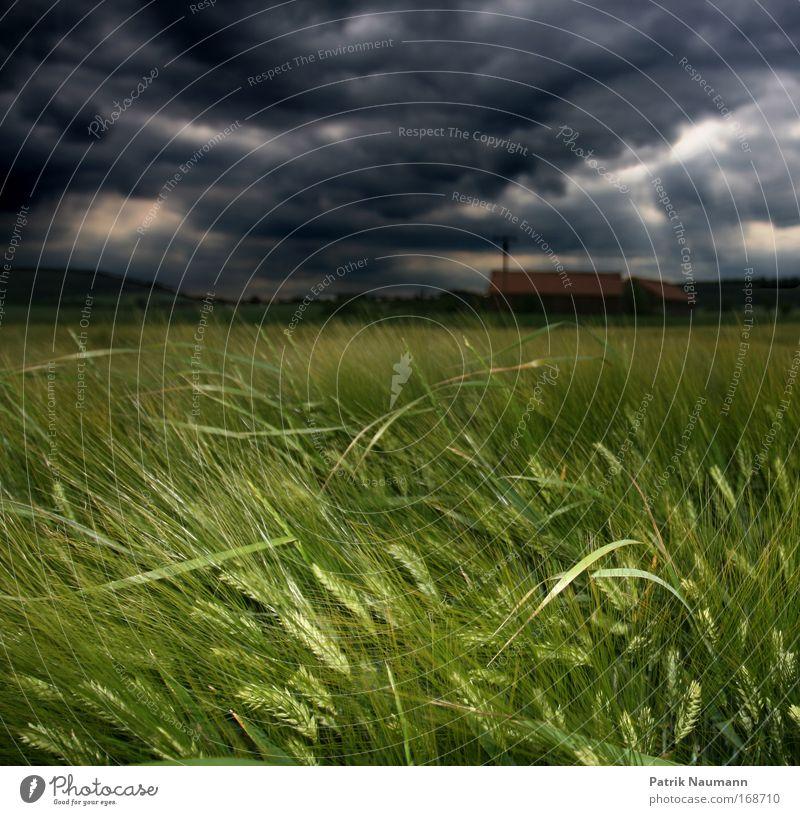 Gewitterfront Farbfoto Außenaufnahme Textfreiraum oben Abend Dämmerung Blitzlichtaufnahme Umwelt Natur Landschaft Wolken Gewitterwolken Frühling Sommer Klima