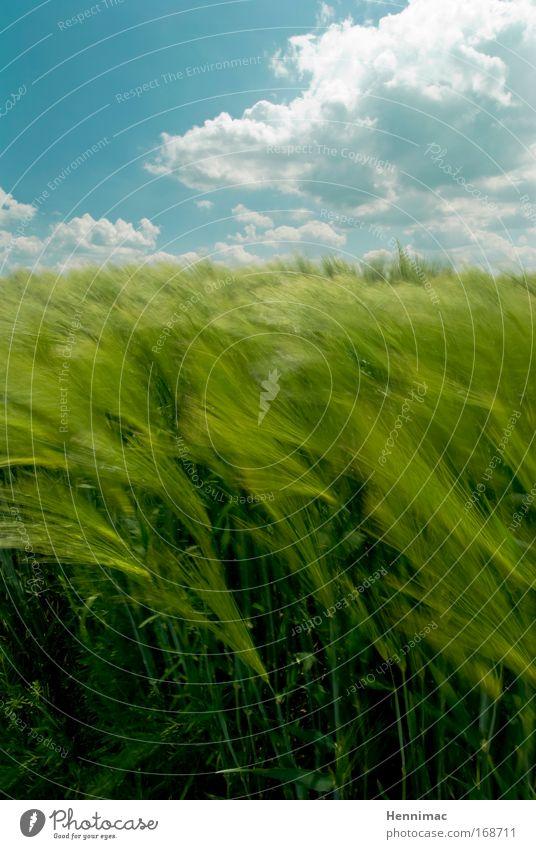 Windfenster II. Natur Himmel grün blau Sommer Ferien & Urlaub & Reisen Wolken Tier Gras Freiheit träumen Landschaft Luft Feld Umwelt
