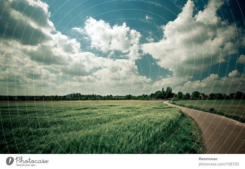 Windmühlenland. Himmel Natur grün Ferien & Urlaub & Reisen Sommer Tier Wolken Einsamkeit Ferne Erholung Umwelt Landschaft Freiheit Gras Stimmung braun