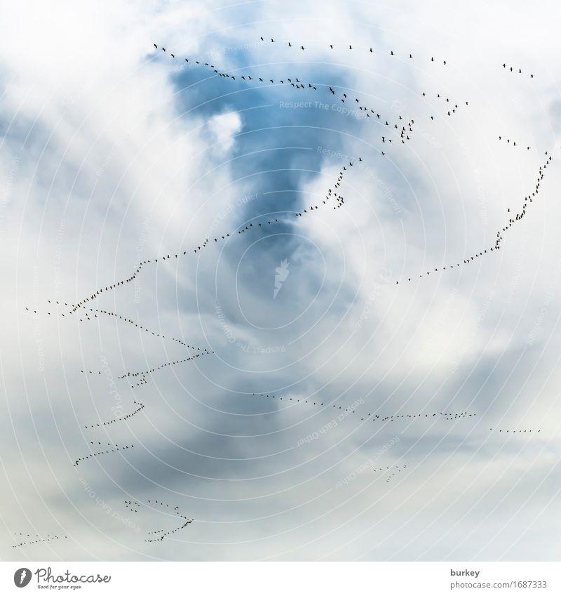 Brexit? Glück ruhig Ferne Luft nur Himmel Wolken Herbst Wind Vogel Schwarm Linie Schnur Zusammensein Solidarität Ausdauer Hoffnung Fernweh Abenteuer Beginn