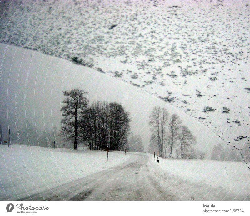 Winterfahrt Schwarzweißfoto Außenaufnahme Menschenleer Tag Zentralperspektive Ferne Freiheit Schnee Winterurlaub Umwelt Natur Landschaft Eis Frost Baum