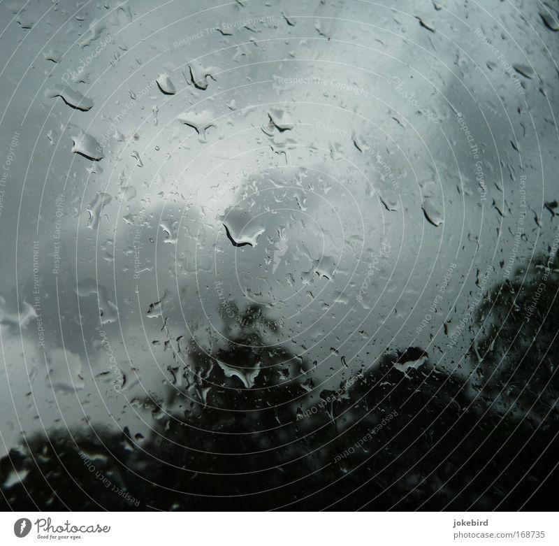 Zum Glück im Trocknen Wasser Wassertropfen Himmel Wolken Wetter Unwetter Regen Baum Fenster Glas Tropfen frieren warten weinen Ferne kalt nass oben grau
