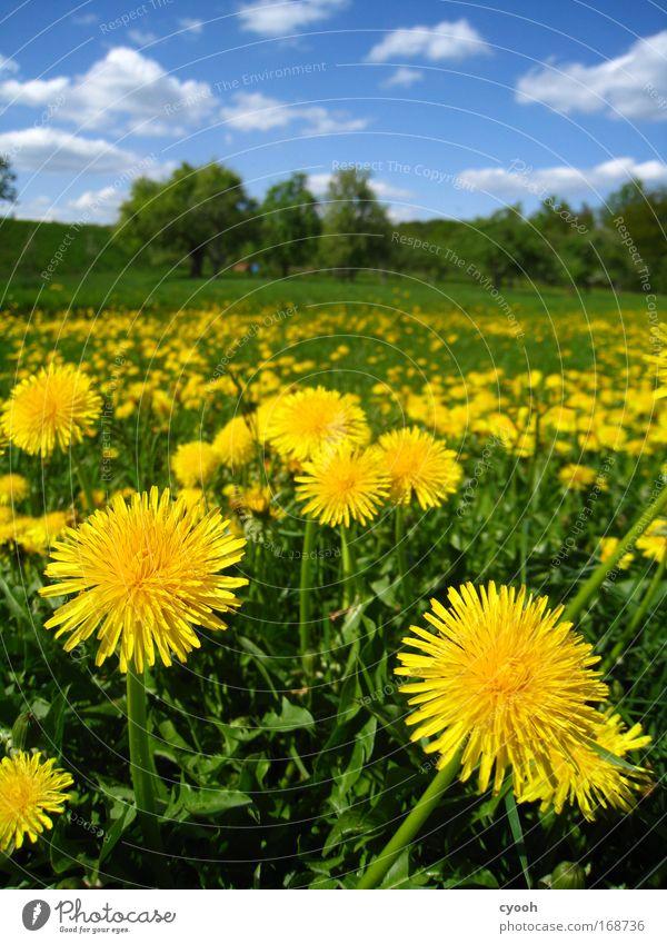 zum anbeißen... Natur Himmel Blume grün blau Pflanze Sommer ruhig Tier gelb Leben Wiese Blüte Gras Frühling Glück