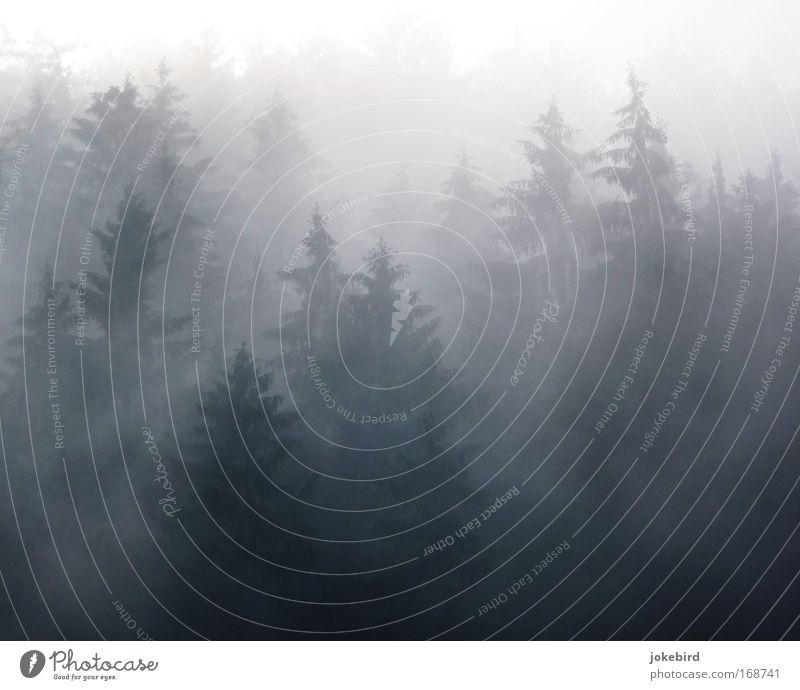 Nebelzauber Natur weiß Baum Wald grau träumen Luft Angst Spitze geheimnisvoll Trauer viele Hügel Zukunftsangst gruselig