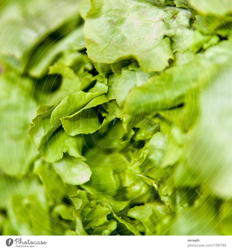 Frisches Grün Salatbeilage Futter lecker Gesundheit grün zartes Grün Vitamin B Vitamin C Vitamin A vitaminreich knusprig Kartoffelchips frisch Gemüse Pflanze