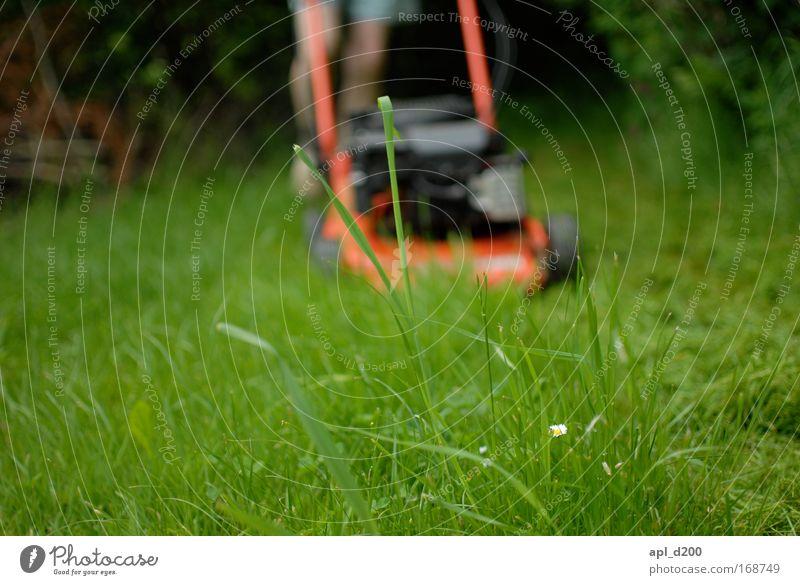Kurzhaarschnitt Farbfoto Außenaufnahme Textfreiraum unten Tag Schwache Tiefenschärfe Froschperspektive Garten Mensch maskulin Mann Erwachsene Beine Fuß 1