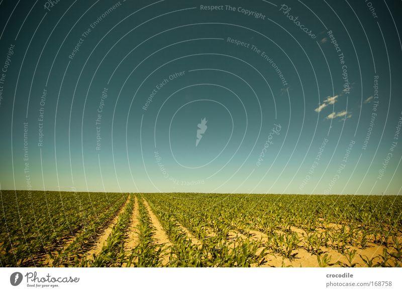 Maisfeld II Natur Himmel Sonne Pflanze Sommer Wolken Frühling Landschaft Luft Feld Wetter Umwelt Erde ästhetisch Klima Landwirtschaft