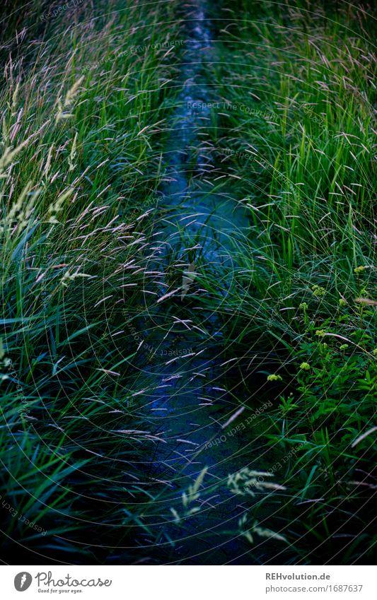 Bach Natur Pflanze grün Landschaft Umwelt Wiese natürlich Stimmung Feld nass Umweltschutz Umweltverschmutzung