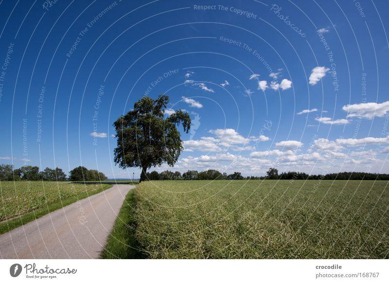 Maisfeld VIII Natur Himmel Sonne Pflanze Sommer Wolken Straße Frühling Landschaft Luft Feld Straßenverkehr Wetter Umwelt Erde ästhetisch