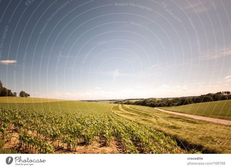 Maisfeld IX Himmel Natur Baum Pflanze Sommer Einsamkeit Wolken Umwelt Landschaft Straße Frühling Wege & Pfade Erde Wetter Feld Klima