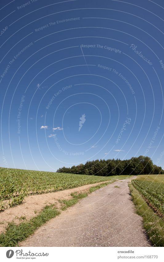 maisfeld XI Natur Himmel Sonne Pflanze Sommer Wolken Straße Frühling Landschaft Luft Feld Straßenverkehr Wetter Umwelt Erde ästhetisch