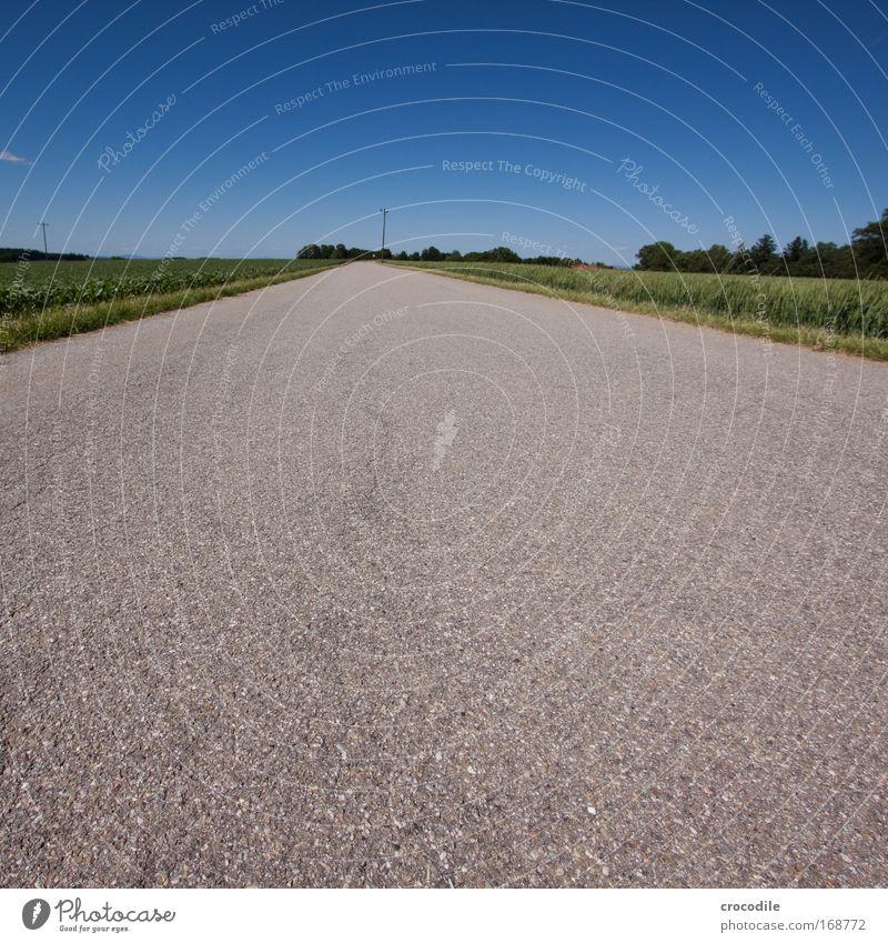 Feldweg II Farbfoto mehrfarbig Außenaufnahme Menschenleer Textfreiraum oben Textfreiraum unten Textfreiraum Mitte Tag Schatten Kontrast Starke Tiefenschärfe