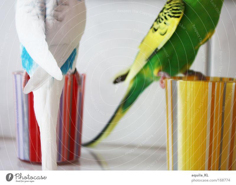 Alle beide LIEB haben blau grün weiß rot Tier gelb natürlich Vogel rosa fliegen maskulin Tierpaar Wildtier paarweise Feder Streifen