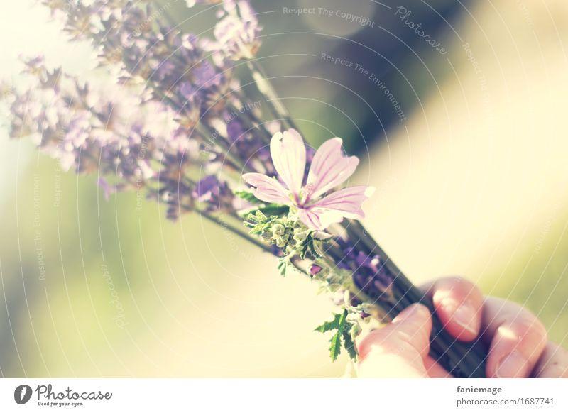 congrats Natur Schönes Wetter Feld Feste & Feiern Gratulation Freude Lavendel Lavendelstrauß Blumenstrauß Strauß violett Lavendelfeld Provence Hand Blüte