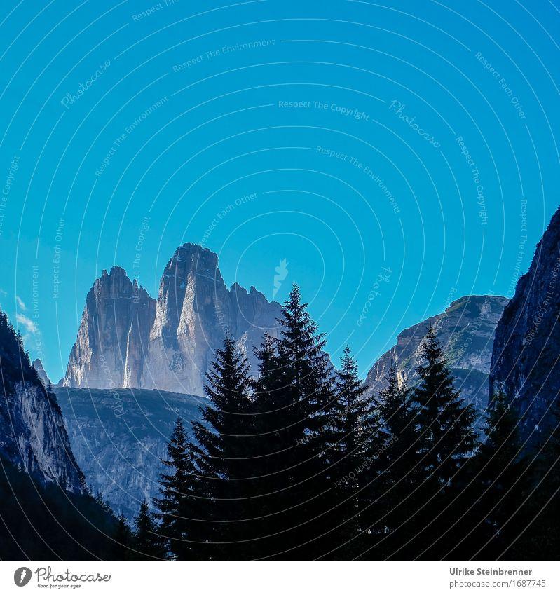 Drei Zinnen Blick 2 Sommer Berge u. Gebirge Umwelt Natur Landschaft Pflanze Wolkenloser Himmel Schönes Wetter Baum Tanne Wald Felsen Alpen Dolomiten Gipfel hoch