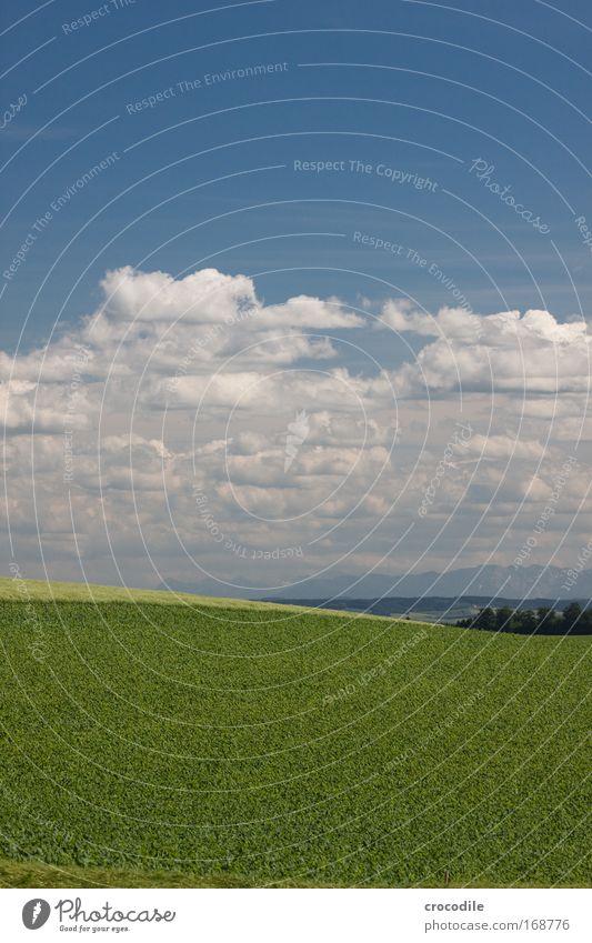 Voralpenlandschaft Himmel Natur Pflanze Sommer Wolken Umwelt Landschaft Wiese Berge u. Gebirge Gefühle Stimmung Erde Wetter Felsen Feld Klima