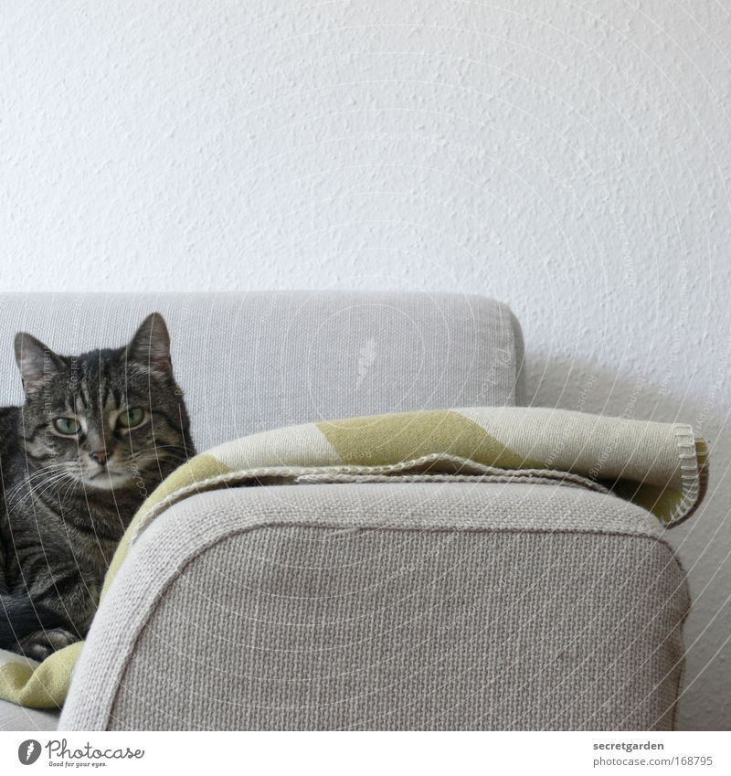 alter- was kommt heute im fernseh'n? weiß grün Einsamkeit Tier Erholung grau Traurigkeit Katze Wärme Zufriedenheit Fernsehen warten Wohnung Design Ordnung
