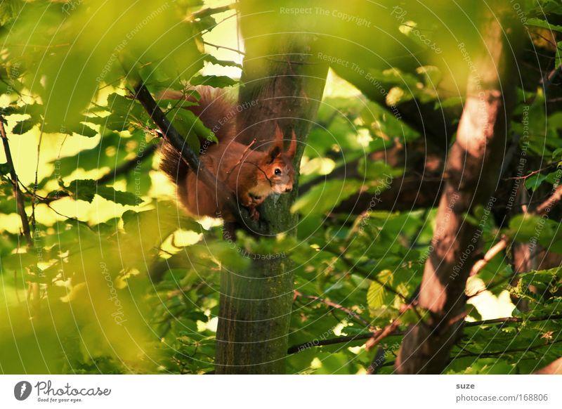 Chamäleon Natur grün Pflanze Baum Tier Blatt Landschaft Umwelt klein natürlich Wildtier sitzen niedlich beobachten Fell Baumstamm