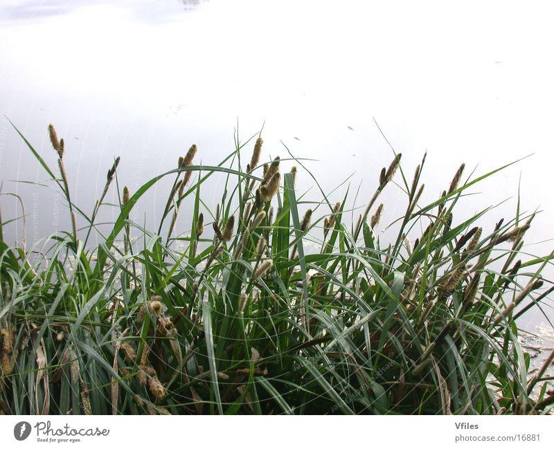 Frühlingserwachen Natur grün Pflanze