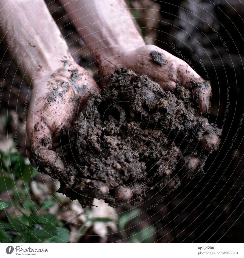 Muttererde Mensch Natur Hand grün Pflanze Erwachsene Umwelt Spielen Gras braun Erde dreckig maskulin ästhetisch Sträucher Warmherzigkeit