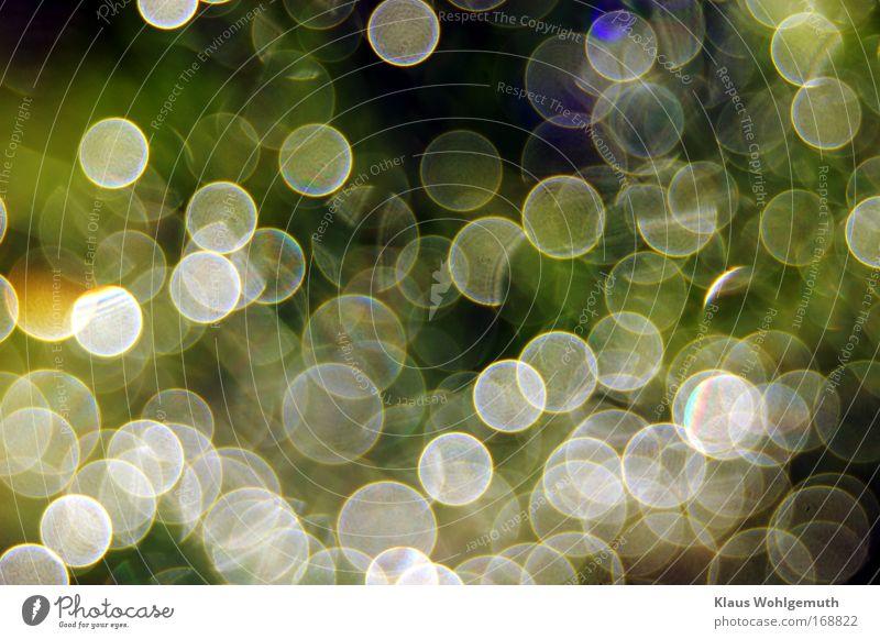 Morgentau Natur Wasser schön grün blau Pflanze Frühling träumen Wärme Stimmung Diamant Fröhlichkeit Edelstein Romantik Klima leuchten