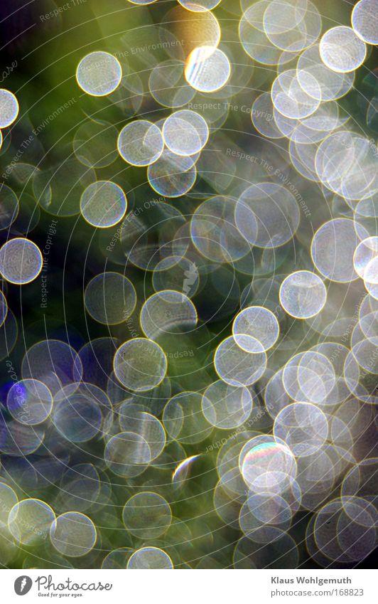 Morgentau 2 Natur blau Wasser grün Pflanze Umwelt gelb Stimmung Klima Fröhlichkeit leuchten Wassertropfen Warmherzigkeit Romantik fantastisch Dill