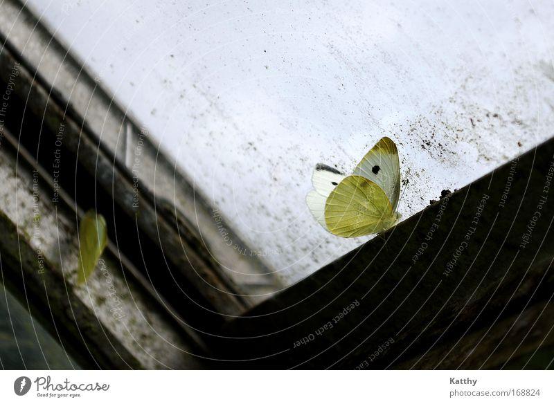 Die Sehnsucht des Schmetterlings schön ruhig schwarz Einsamkeit Tier gelb dunkel Gefühle Traurigkeit Stimmung warten dreckig Hoffnung trist Flügel Insekt
