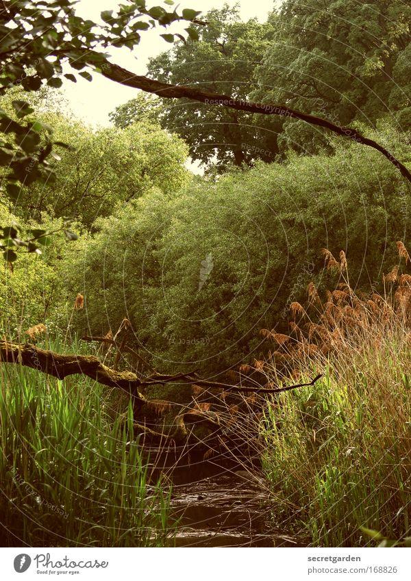 [HH09.3/4] nach fünf im urwald Wasser grün Baum Pflanze Sommer Ferien & Urlaub & Reisen Einsamkeit Wald Erholung Freiheit Umwelt Gras Frühling Park Ausflug groß