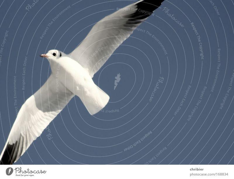 Freiheit Natur schön Himmel weiß blau Strand Tier Ferne oben Luft Vogel frei Insel Feder Flügel