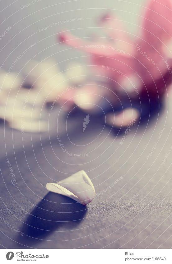 Schattenherz Farbfoto Gedeckte Farben Innenaufnahme Unschärfe Blume Dekoration & Verzierung Kitsch Krimskrams ästhetisch Sympathie Verliebtheit Romantik schön