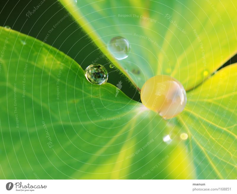 precious stones Natur Pflanze Sommer Erholung Blatt ruhig Frühling Stil Stimmung Design glänzend leuchten Dekoration & Verzierung ästhetisch Wassertropfen