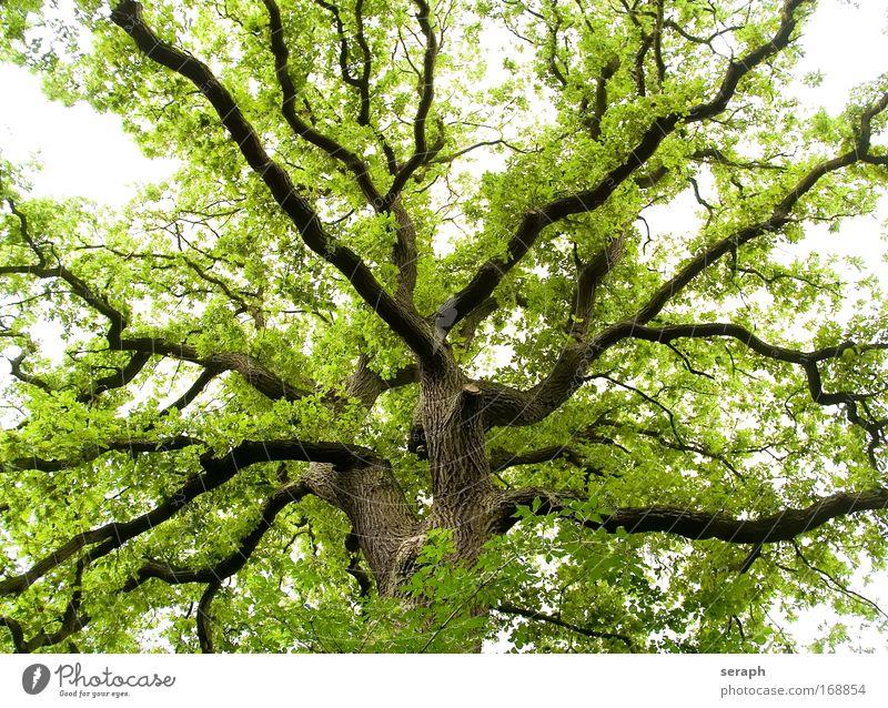 Grünes Labyrinth Biologie Blatt Wald Holz Ast Botanik Märchen Phantasie Geäst pflanzlich verzweigt Kruste