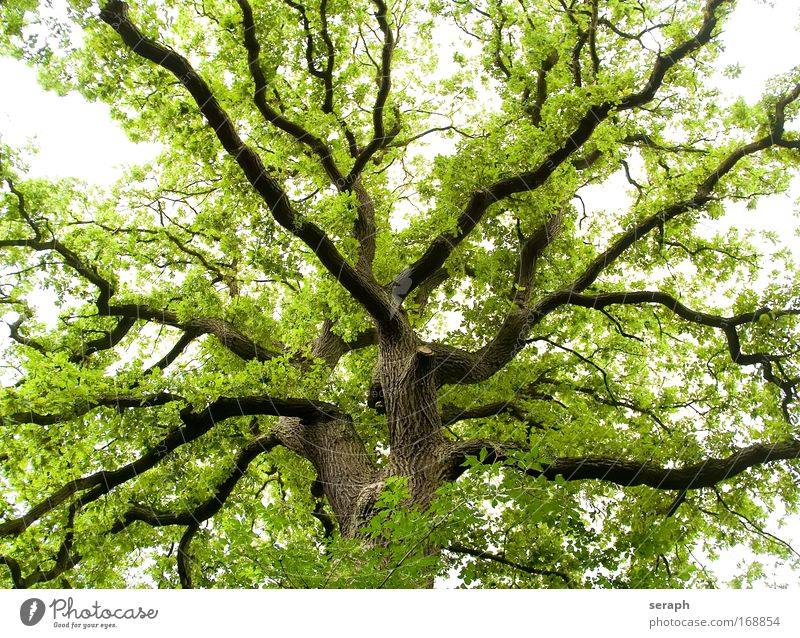 Grünes Labyrinth Biologie Blatt Wald Holz Ast Botanik Märchen Phantasie Geäst pflanzlich Labyrinth verzweigt Kruste