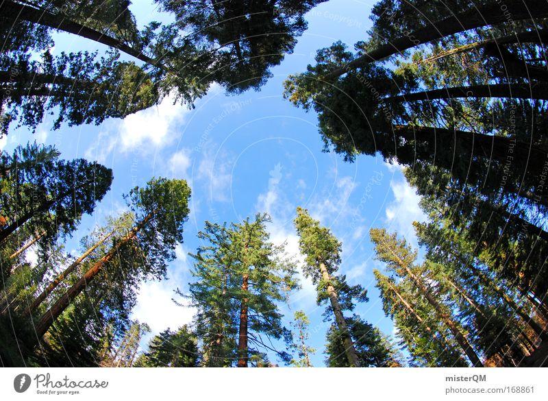 Lichtung. Himmel grün Ferien & Urlaub & Reisen Wald Leben Holz Erde groß Horizont hoch Perspektive Wachstum USA Pause Aussicht bedrohlich