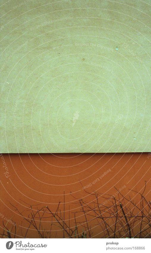 Simplicity III schön Pflanze Wand Mauer Linie orange Beton leer Sträucher einfach