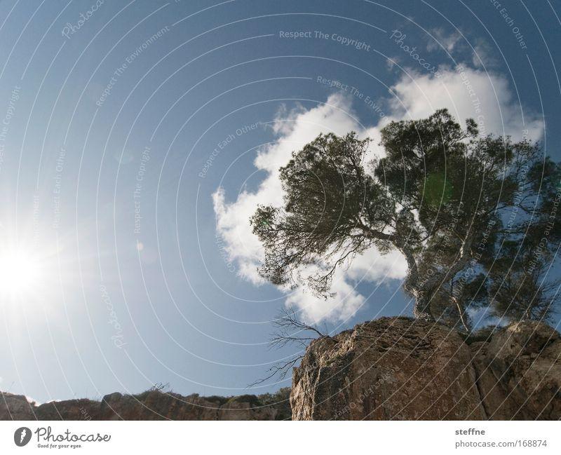 Mimese Farbfoto Außenaufnahme Textfreiraum oben Tag Sonnenstrahlen Gegenlicht Froschperspektive Natur Landschaft Himmel Wolken Frühling Sommer Schönes Wetter