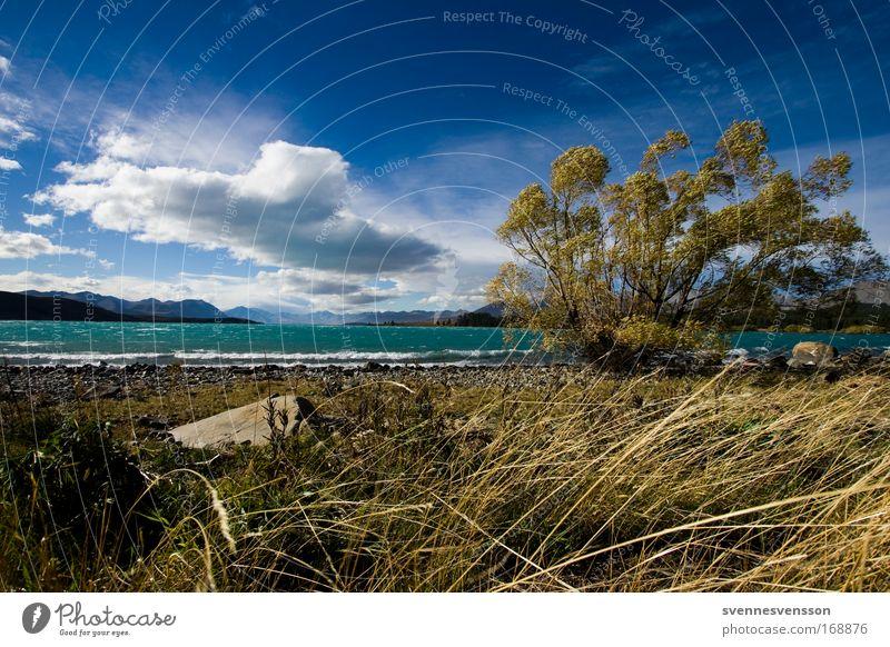 Lake Tekapo (NZ) Farbfoto Außenaufnahme Menschenleer Tag Zentralperspektive Umwelt Natur Landschaft Pflanze Wasser Himmel Wolken Horizont Herbst Schönes Wetter