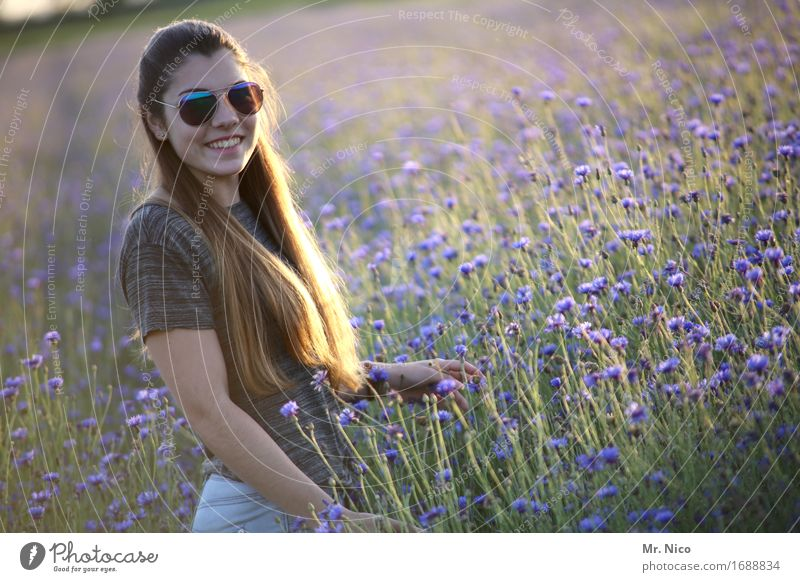 sunny side of life feminin Umwelt Natur Landschaft Sommer Gras Wildpflanze Feld Sonnenbrille brünett langhaarig schön Wärme Schönes Wetter Lächeln Kornblume