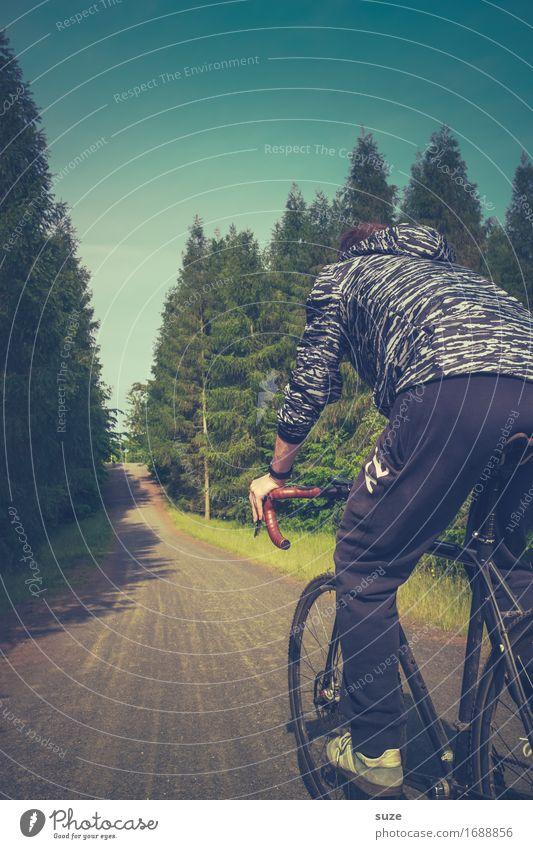 Sattelfest Lifestyle Freizeit & Hobby Ausflug Fahrradtour Sommer Fahrradfahren Mensch maskulin Junger Mann Jugendliche Erwachsene Umwelt Natur Landschaft Baum